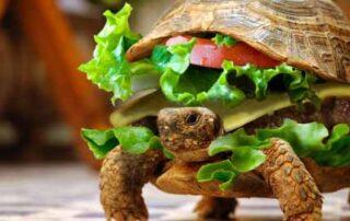 As 15 refeições mais insólitas dos Bandejões