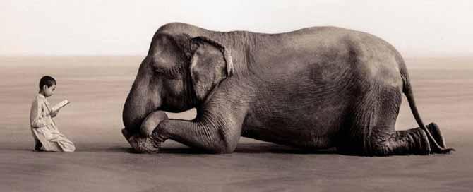 Os cegos, o elefante e a pesquisa científica