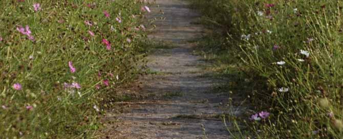 Entre pedregulhos e flores...